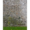 Promaster-Scenic Backdrops - 8' x 10' - Garden Wall #6966-Backgrounds