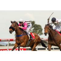 Alury Races Oaks Day 2014