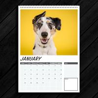 A4 - 2019 Wall Calendar (NEW)