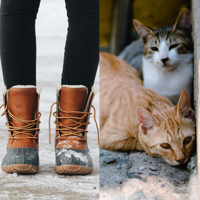 Boots & Cats