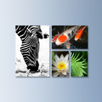 Canvas Wraps - Fine Art