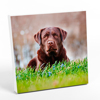 "10x10"" Photo Canvas Print - White Edges"