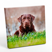 "10x10"" Square Photo Canvas Print"