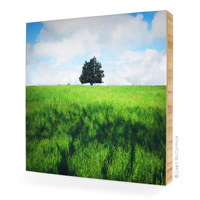 4x4 Bamboo Mounted Photograph