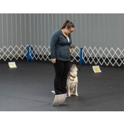 OBEDIENCE  BEGINNER NOVICE SUNDAY NOV 10