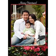 Azalea Merry Christmas (V)