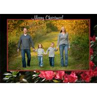 Azalea Merry Christmas (H)