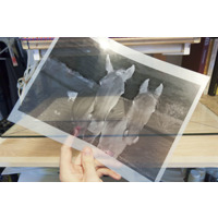 Film Paper