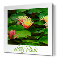 12 x 12 Clear Cover Photo Book
