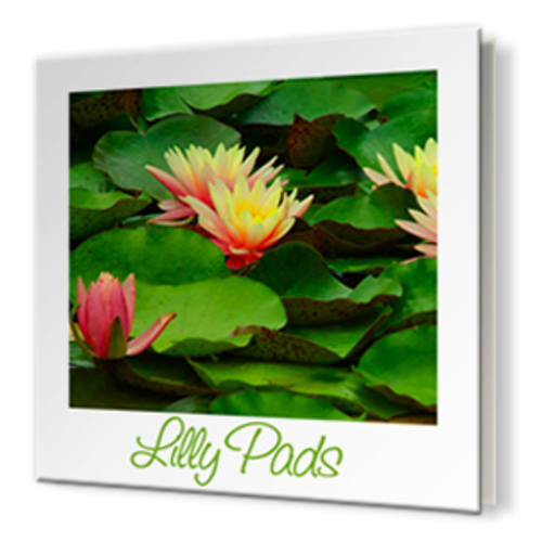 12 x 12 Soft Cover Photo Book