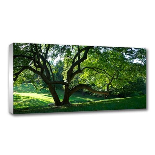 12 x 36 Canvas - 1.25 inch White Wrap