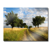 8 x 10 Acrylic Horizontal