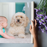 Canvas Prints with Mounting Options