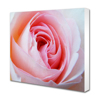 8 x 10 Horizontal Foam Mount - 20mm White Edge
