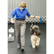 BCDC RALLY-OBEDIENCE TRIAL 11-7 & 11-8  EMAIL ME FOR SPECIAL PRICING
