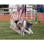 BCDC FALL AGILITY TRIAL 2017