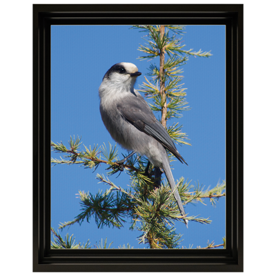 Framed Photo Canvas - 11x14 - V