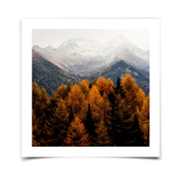 8x8 Fine Art Print with White Borders