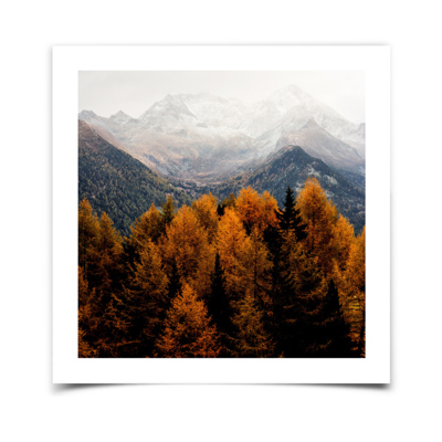 11x11 Fine Art Print with White Borders