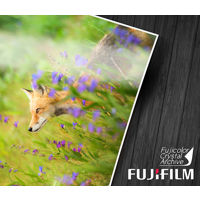 Large Format Glossy/Lustre Prints