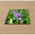 High gloss 90mm x 90mm coaster