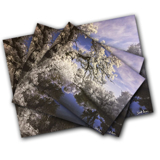8 x 10 Metallic Paper Horizontal