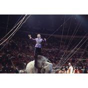 Circus Gunter & Friends