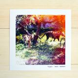 5 x 5 Single Sided Postcard