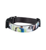 Small Pet Collar