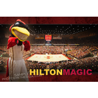 Hilton Magic 12x18 to 36x48