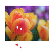 16 x 20 Premium Photo Puzzle - Glossy