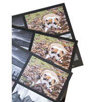 8x10 Fine Art Matte Print